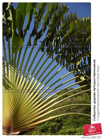 Купить «Сейшелы: дерево путешественников», фото № 245737, снято 29 августа 2007 г. (c) Андрей Каплановский / Фотобанк Лори