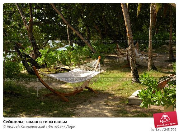 Сейшелы: гамак в тени пальм, фото № 245709, снято 28 августа 2007 г. (c) Андрей Каплановский / Фотобанк Лори