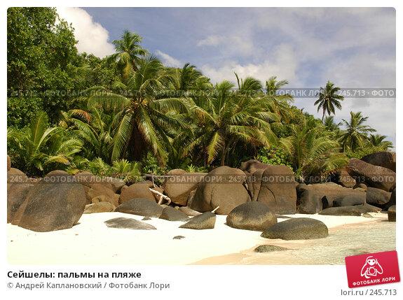 Сейшелы: пальмы на пляже, фото № 245713, снято 28 августа 2007 г. (c) Андрей Каплановский / Фотобанк Лори