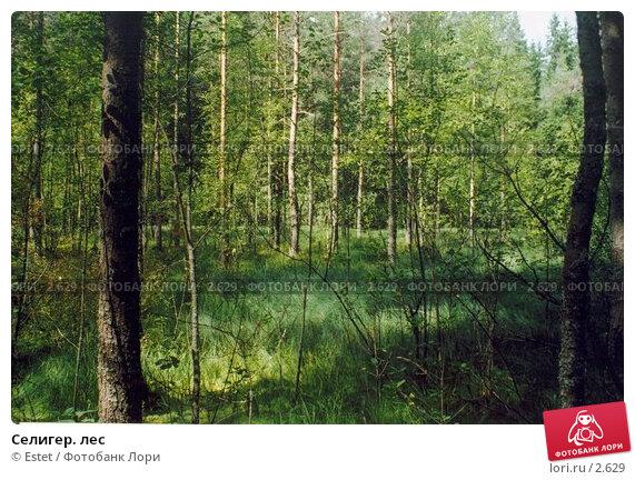 Селигер. лес, фото № 2629, снято 22 июня 2017 г. (c) Estet / Фотобанк Лори