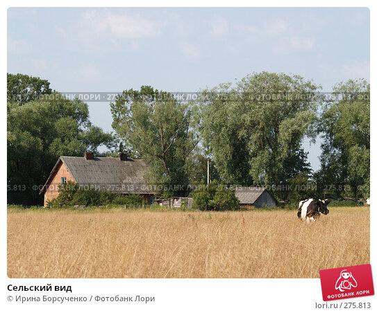 Сельский вид, фото № 275813, снято 21 июля 2006 г. (c) Ирина Борсученко / Фотобанк Лори