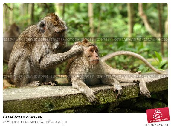 Семейство обезьян, фото № 239741, снято 24 февраля 2008 г. (c) Морозова Татьяна / Фотобанк Лори