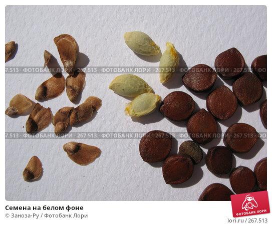 Семена на белом фоне, фото № 267513, снято 26 апреля 2008 г. (c) Заноза-Ру / Фотобанк Лори