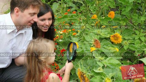 Купить «Семья смотрит растения через лупу», видеоролик № 3712453, снято 6 сентября 2010 г. (c) Losevsky Pavel / Фотобанк Лори