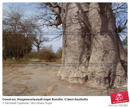 Сенегал, Национальный парк Bandia. Ствол баобаба, фото № 135581, снято 1 декабря 2007 г. (c) Евгений Горюнов / Фотобанк Лори
