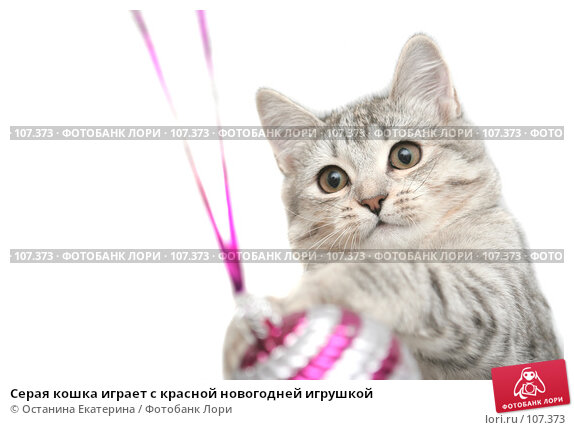 Серая кошка играет с красной новогодней игрушкой, фото № 107373, снято 26 октября 2007 г. (c) Останина Екатерина / Фотобанк Лори