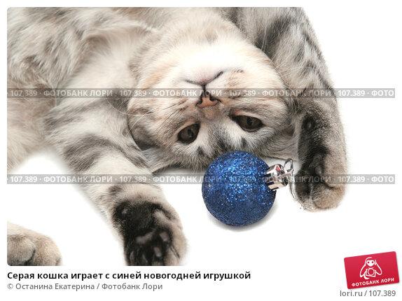 Серая кошка играет с синей новогодней игрушкой, фото № 107389, снято 19 октября 2007 г. (c) Останина Екатерина / Фотобанк Лори