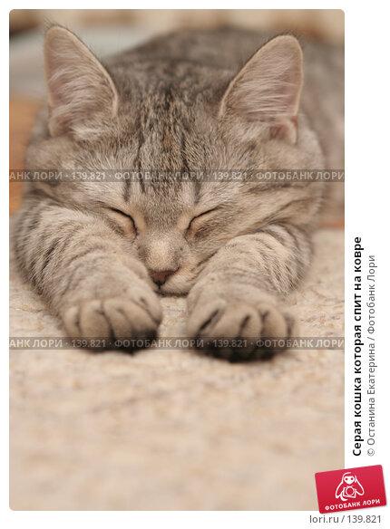 Серая кошка которая спит на ковре, фото № 139821, снято 16 ноября 2007 г. (c) Останина Екатерина / Фотобанк Лори