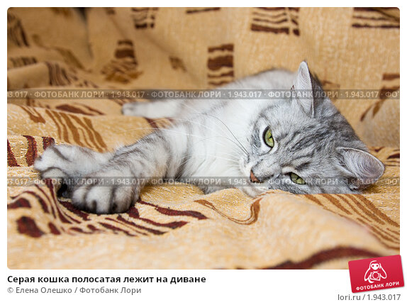 how to get cat urine out of carpet naturally
