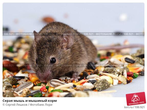 Серая мышь и мышиный корм, фото № 100921, снято 23 сентября 2007 г. (c) Сергей Лешков / Фотобанк Лори