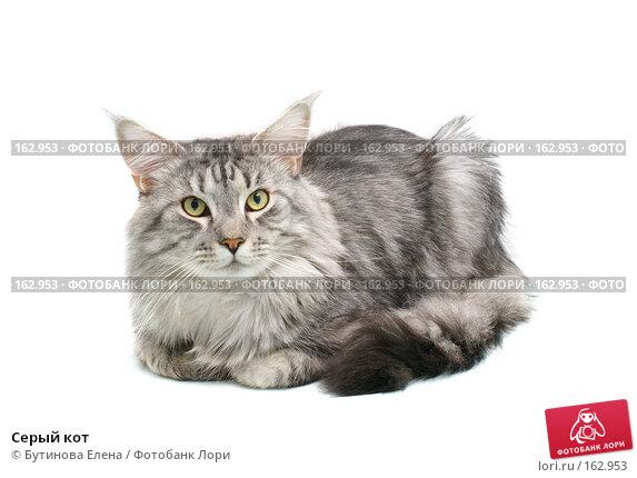 Серый кот, фото № 162953, снято 13 октября 2007 г. (c) Бутинова Елена / Фотобанк Лори