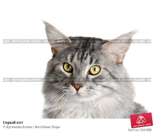 Серый кот, фото № 163089, снято 17 октября 2007 г. (c) Бутинова Елена / Фотобанк Лори