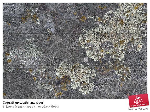 Серый лишайник, фон, фото № 54489, снято 16 июня 2007 г. (c) Елена Мельникова / Фотобанк Лори