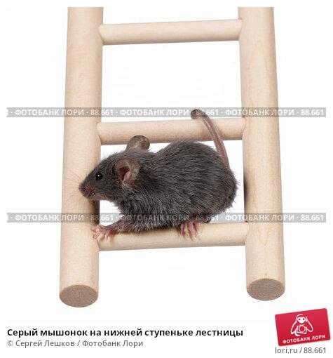 Серый мышонок на нижней ступеньке лестницы, фото № 88661, снято 23 сентября 2007 г. (c) Сергей Лешков / Фотобанк Лори
