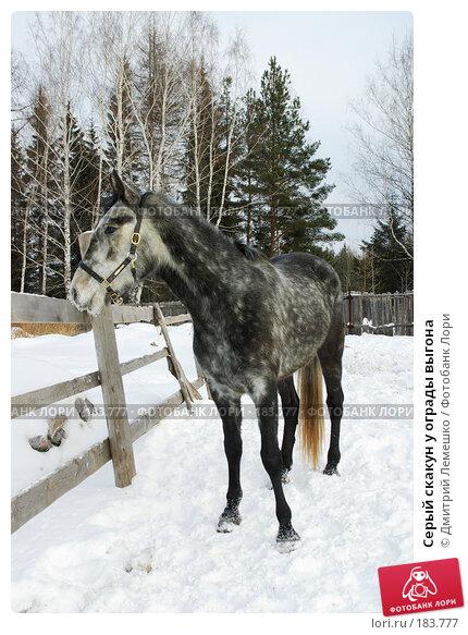 Серый скакун у ограды выгона, фото № 183777, снято 19 января 2008 г. (c) Дмитрий Лемешко / Фотобанк Лори