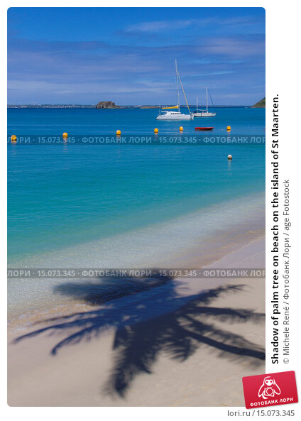 Купить «Shadow of palm tree on beach on the island of St Maarten.», фото № 15073345, снято 6 ноября 2012 г. (c) age Fotostock / Фотобанк Лори