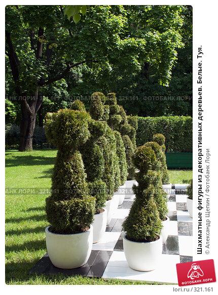 Шахматные фигуры из декоративных деревьев. Белые. Туя., эксклюзивное фото № 321161, снято 31 мая 2008 г. (c) Александр Щепин / Фотобанк Лори