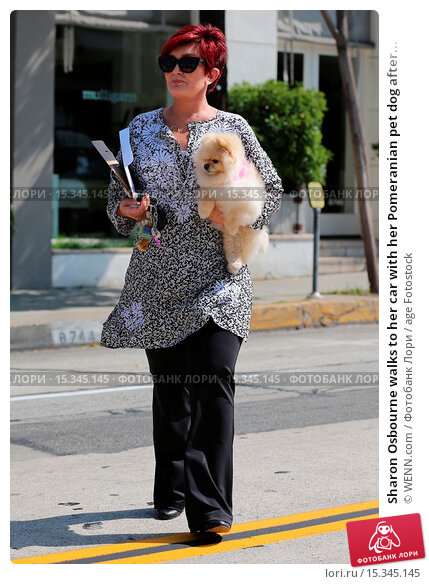 Купить «Sharon Osbourne walks to her car with her Pomeranian pet dog after shopping at Mulligan boutique. Sharon received a parking ticket for an expired parking...», фото № 15345145, снято 25 июня 2014 г. (c) age Fotostock / Фотобанк Лори