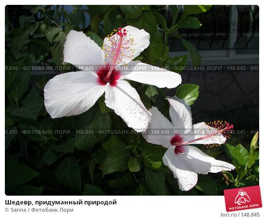Шедевр, придуманный природой, фото № 148845, снято 15 мая 2007 г. (c) Sanna / Фотобанк Лори