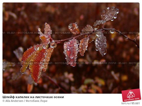 Шлейф капелек на листочках осени, фото № 85661, снято 25 ноября 2006 г. (c) Alla Andersen / Фотобанк Лори