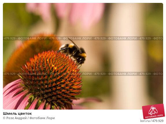Купить «Шмель цветок», фото № 479929, снято 24 августа 2008 г. (c) Розе Андрей / Фотобанк Лори