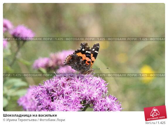 Шоколадница на васильке, эксклюзивное фото № 1425, снято 18 сентября 2005 г. (c) Ирина Терентьева / Фотобанк Лори