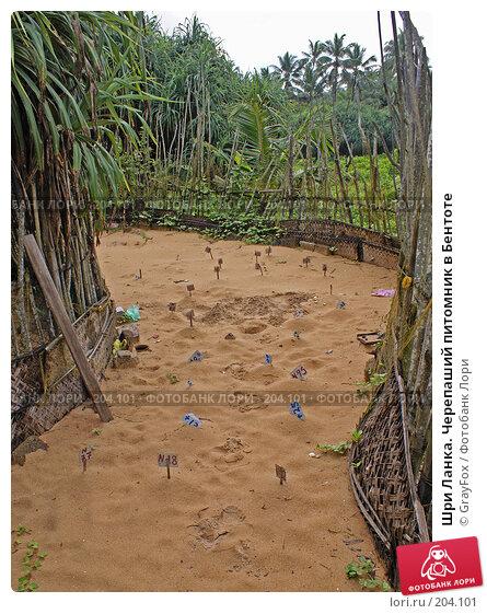 Шри Ланка. Черепаший питомник в Бентоте, фото № 204101, снято 8 января 2008 г. (c) GrayFox / Фотобанк Лори