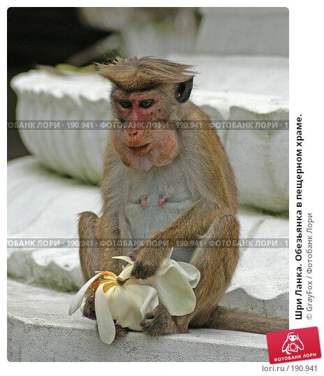 Шри Ланка. Обезьянка в пещерном храме., фото № 190941, снято 8 января 2008 г. (c) GrayFox / Фотобанк Лори