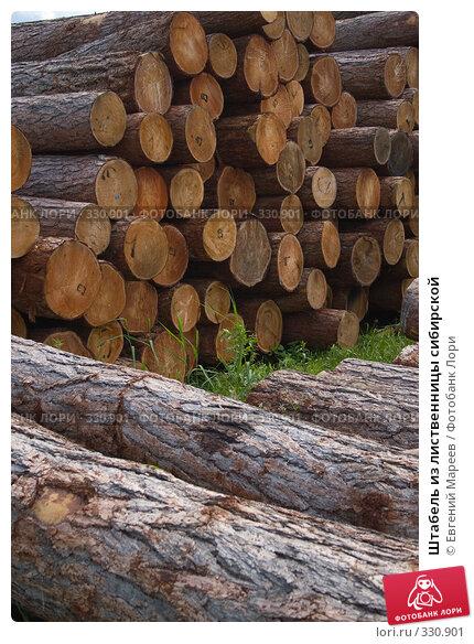 Купить «Штабель из лиственницы сибирской», фото № 330901, снято 19 июня 2008 г. (c) Евгений Мареев / Фотобанк Лори