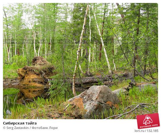 Купить «Сибирская тайга», фото № 132185, снято 3 июля 2004 г. (c) Serg Zastavkin / Фотобанк Лори