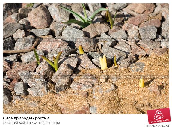 Сила природы - ростки, фото № 209281, снято 1 апреля 2007 г. (c) Сергей Байков / Фотобанк Лори