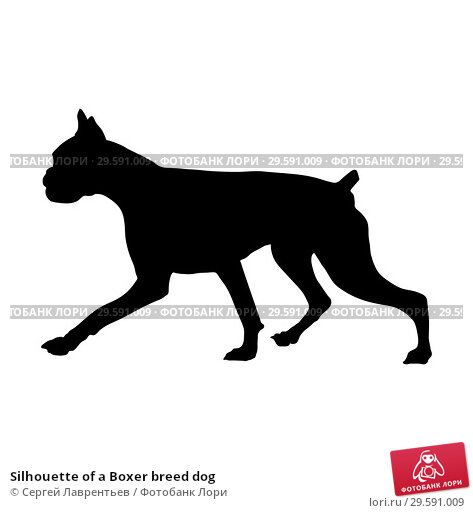 Купить «Silhouette of a Boxer breed dog», иллюстрация № 29591009 (c) Сергей Лаврентьев / Фотобанк Лори