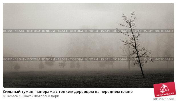 Купить «Сильный туман, панорама с тонким деревцем на переднем плане», фото № 15541, снято 21 декабря 2006 г. (c) Tamara Kulikova / Фотобанк Лори