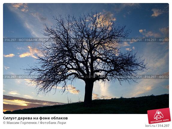 Силуэт дерева на фоне облаков, фото № 314297, снято 23 апреля 2008 г. (c) Максим Горпенюк / Фотобанк Лори