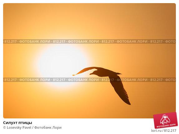 Купить «Силуэт птицы», фото № 812217, снято 17 июня 2019 г. (c) Losevsky Pavel / Фотобанк Лори