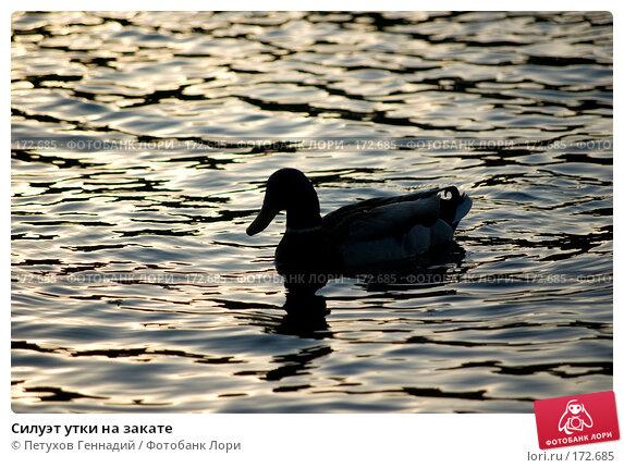 Силуэт утки на закате, фото № 172685, снято 2 июня 2007 г. (c) Петухов Геннадий / Фотобанк Лори
