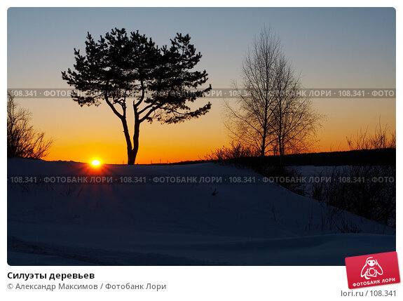 Силуэты деревьев, фото № 108341, снято 24 февраля 2007 г. (c) Александр Максимов / Фотобанк Лори