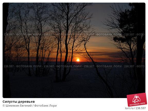 Купить «Силуэты деревьев», фото № 238597, снято 18 декабря 2017 г. (c) Шемякин Евгений / Фотобанк Лори