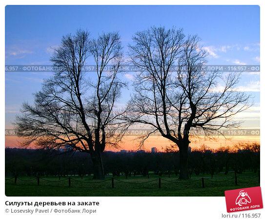 Силуэты деревьев на закате, фото № 116957, снято 7 ноября 2003 г. (c) Losevsky Pavel / Фотобанк Лори