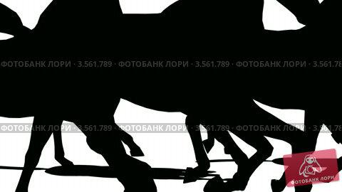 Купить «Силуэты лошадей на белом фоне», видеоролик № 3561789, снято 20 декабря 2009 г. (c) Losevsky Pavel / Фотобанк Лори
