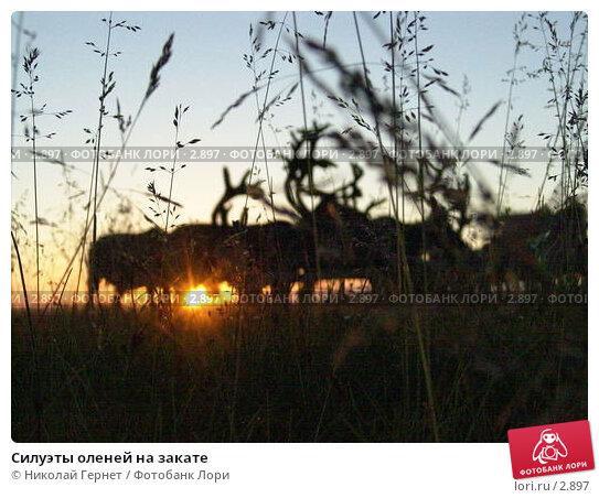 Силуэты оленей на закате, фото № 2897, снято 3 августа 2005 г. (c) Николай Гернет / Фотобанк Лори