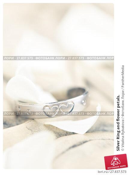Купить «Silver Ring and flower petals.», фото № 27837573, снято 22 февраля 2018 г. (c) PantherMedia / Фотобанк Лори
