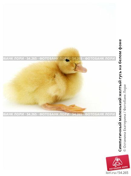 Симпатичный маленький желтый гусь на белом фоне, фото № 54265, снято 22 мая 2007 г. (c) Останина Екатерина / Фотобанк Лори