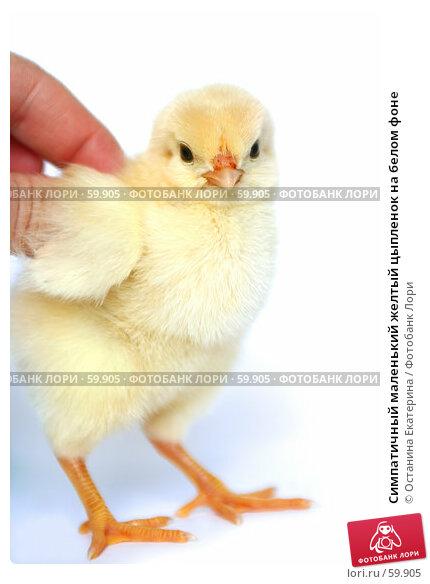 Симпатичный маленький желтый цыпленок на белом фоне, фото № 59905, снято 23 мая 2007 г. (c) Останина Екатерина / Фотобанк Лори
