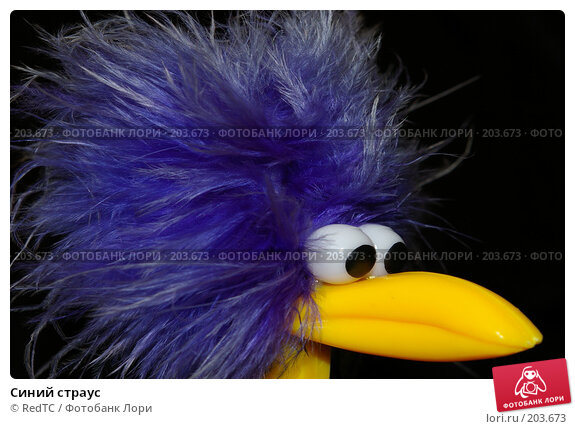 Синий страус, фото № 203673, снято 14 февраля 2008 г. (c) RedTC / Фотобанк Лори