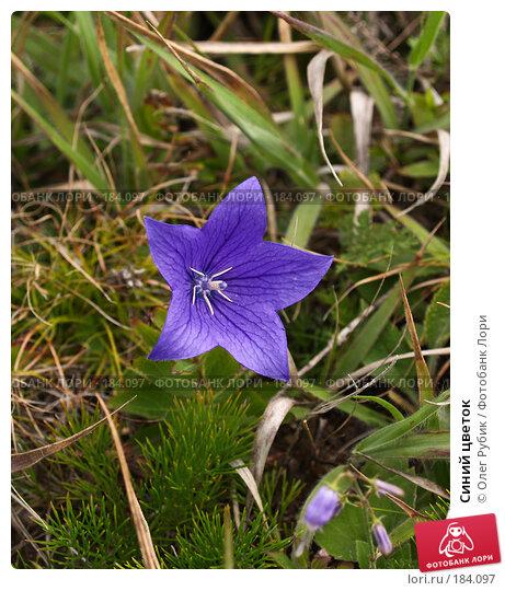 Синий цветок, фото № 184097, снято 15 августа 2007 г. (c) Олег Рубик / Фотобанк Лори
