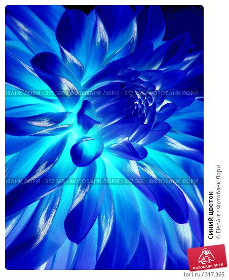 Синий цветок, фото № 317365, снято 27 февраля 2017 г. (c) ElenArt / Фотобанк Лори