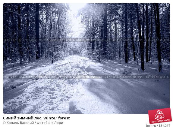 Синий зимний лес. Winter forest, фото № 131217, снято 11 ноября 2007 г. (c) Коваль Василий / Фотобанк Лори
