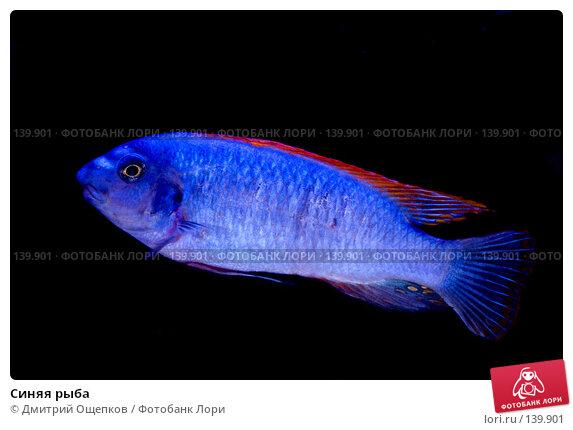 Синяя рыба, фото № 139901, снято 17 марта 2007 г. (c) Дмитрий Ощепков / Фотобанк Лори