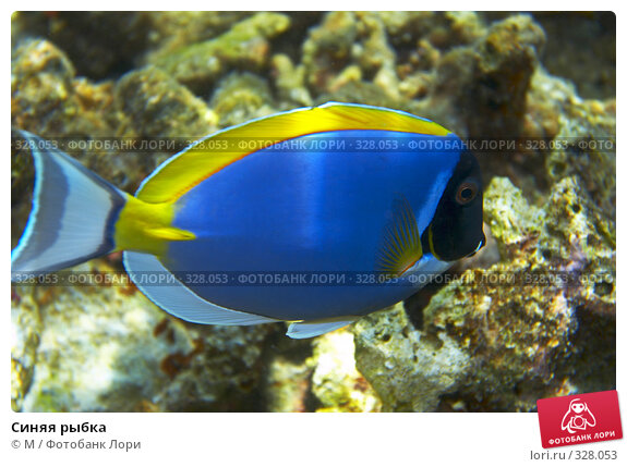 Купить «Синяя рыбка», фото № 328053, снято 18 марта 2018 г. (c) М / Фотобанк Лори